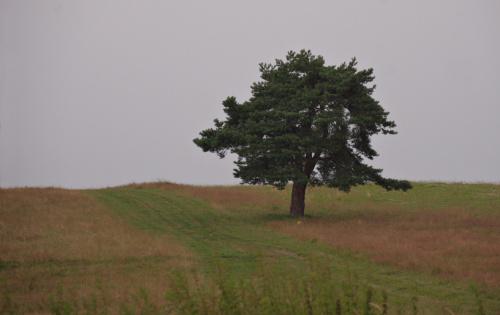 To drzewo, to zapowiedź gór (tu padał deszcz, więc tylko szybkie ujęcie z auta); gór stosunkowo małych, ale za to odwrotnie proporcjonalnie pięknych :)