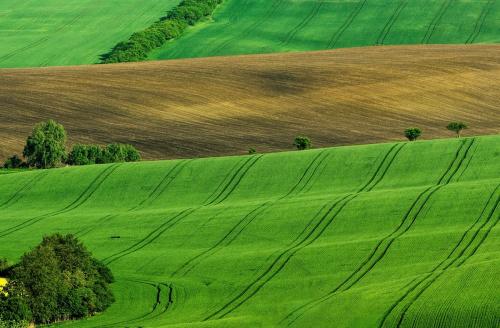 Majowe pola