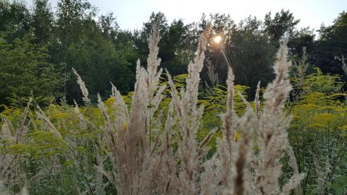 Pstryk codzienny - trawa o zachodzie...