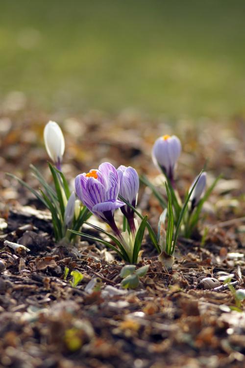 Wiosna, wiosna ach to Ty!
