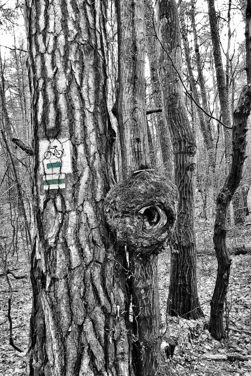 Pstryk Codzienny - tunel rowerowy dla wiewiórek