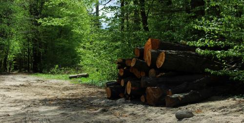 W majowym lesie