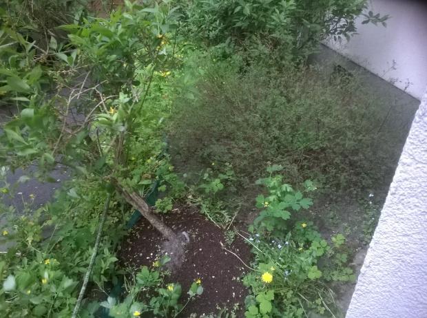 2 Ogródek podwórkowy