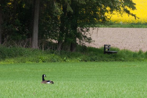 wiosna,wiosna , #wiosna #land #NRW