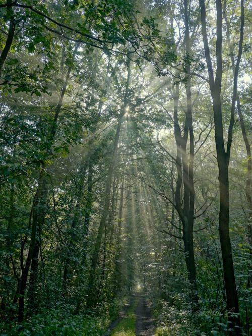 W lesie o poranku...