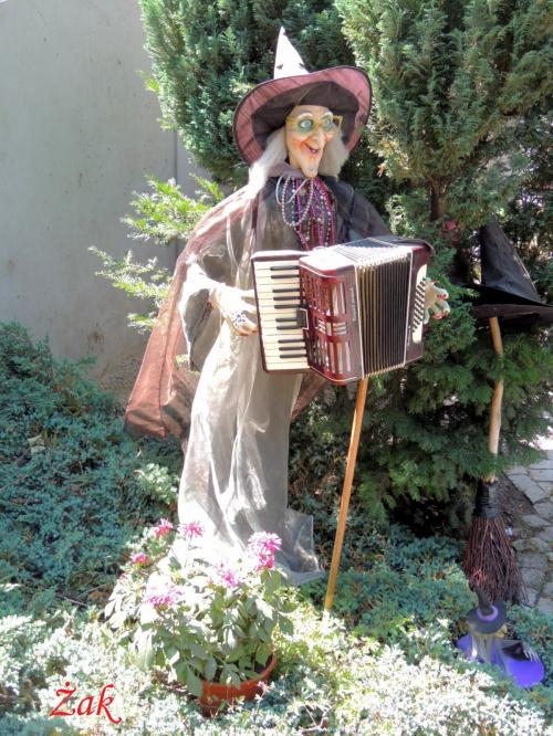Urocza akordeonistka