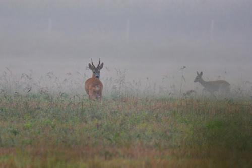 spotkania z przyrodą