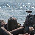 Foki maja towarzystwo roznych ptakow jak mewy,kormorany i tp.. #foki #seehunde #robben #morze #wyspy #helgoland