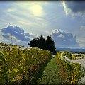 #winnicadolinasanu, #sanok, #winnica, #podkarpackie, #Podkarpacie, #winnicawSanoku, #podkarpacki szlak winnic, #winnicanaPodkarpaciu, #polskie wino, #wino z Podkarpacia, #WinnicaDolinaSanu, #sanok, #winnica, #podparpacie