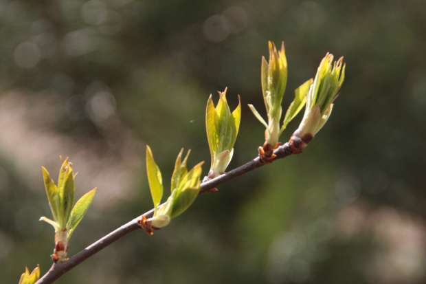 Zielono mi #Natura #wiosna
