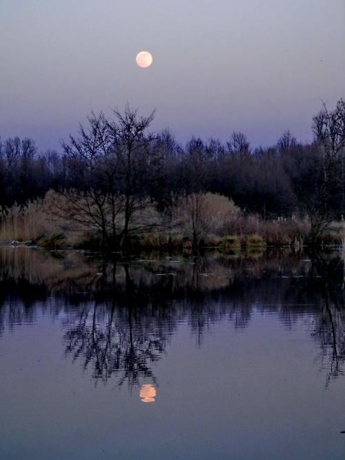 Skapał się księżyc w 'moim' stawie