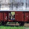 Model wagonu towarowego P.K.P. do przewozu koni. Skala 1:87 H0. Epoka II. Konwersja rocketman. #PKP #wagon #towarowy H0