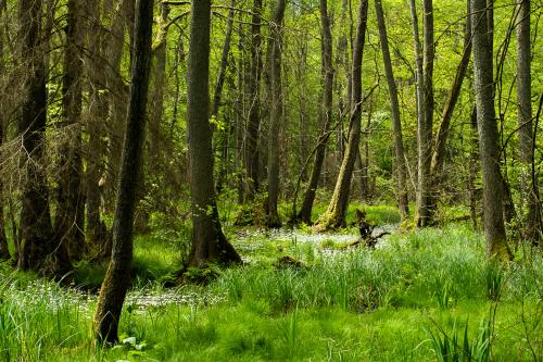 bagienno leśny widoczek