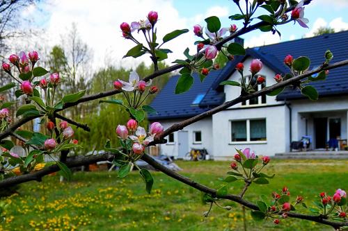 ...w maju... kwiat jabłoni