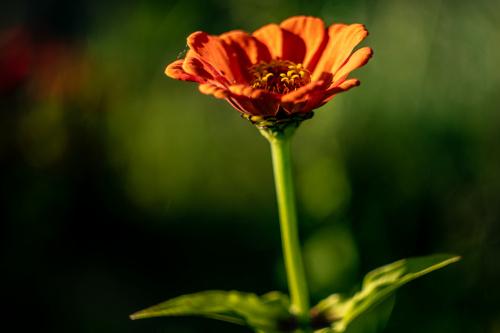 Kwiatkowe love