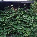 #ogrod #garden #nature #natura