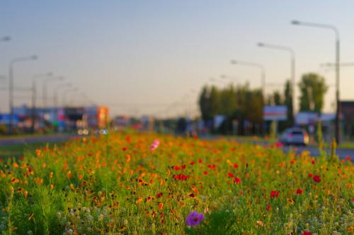 a na miejskiej łące kwiatów wciąż tysiące...