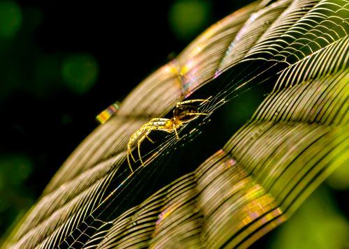 pająk.:)