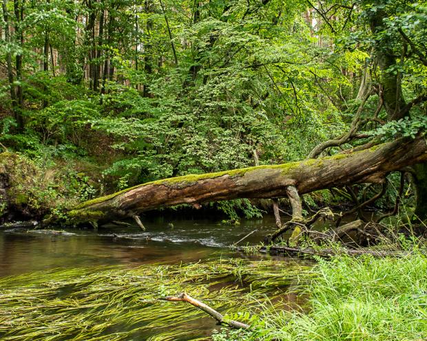 przeszkoda na rzece