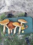 images92.fotosik.pl/42/5957e485b83f55ddm.jpg