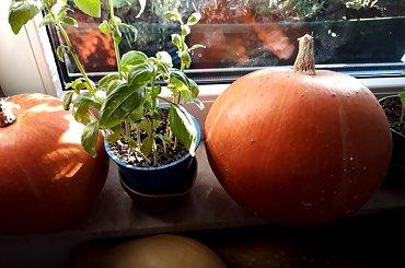 Warzywnik i moje plony działkowe