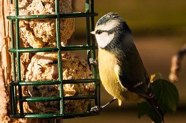 Ptaki i inni mieszancy ogrodu...2020r