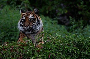 Nowe Życie Leśnej