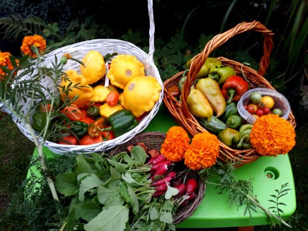 Jesienne zbiory w warzywniku
