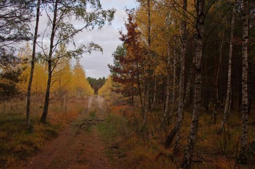 Mało grzybów i mało słońca w lesie, zimno, wiatr... to chyba koniec tej przyjemnej części jesieni. Tu jeszcze zachowało się trochę kolorów :)