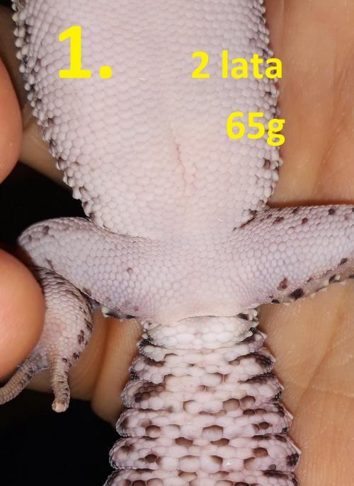 67ba43def0805b0cmed.jpg